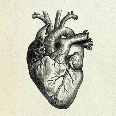 Human heart anatomy vintage - photo#11